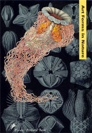 Art Forms in Nature Mini Book